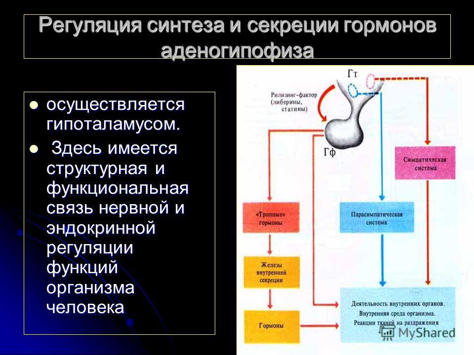 Регуляция синтеза и секреции гормонов аденогипофиза осуществляется гипоталамусом. осуществляется гипоталамусом. Здесь имеется структурная и функциональная связь нервной и эндокринной регуляции функций организма человека Здесь имеется структурная и фу