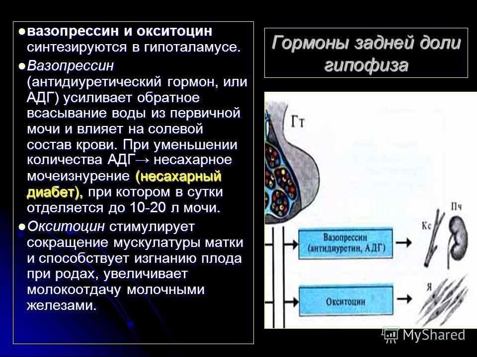Гормоны задней доли гипофиза вазопрессин и окситоцин синтезируются в гипоталамусе. вазопрессин и окситоцин синтезируются в гипоталамусе. Вазопрессин (антидиуретический гормон, или АДГ) усиливает обратное всасывание воды из первичной мочи и влияет на