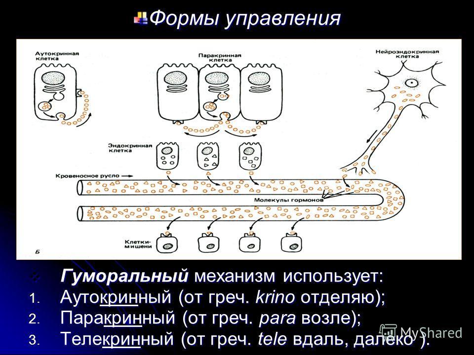 Формы управления Гуморальный механизм использует: Гуморальный механизм использует: 1. Аутокринный (от греч. krino отделяю); 2. Паракринный (от греч. para возле); 3. Телекринный (от греч. tele вдаль, далеко ). Телекринный способ