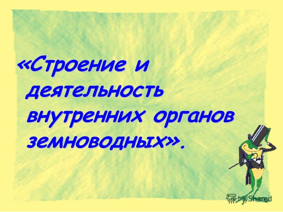 «Строение и деятельность внутренних органов земноводных».