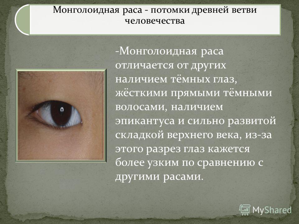 Монголоидная раса - потомки древней ветви человечества -Монголоидная раса отличается от других наличием тёмных глаз, жёсткими прямыми тёмными волосами, наличием эпикантуса и сильно развитой складкой верхнего века, из-за этого разрез глаз кажется боле