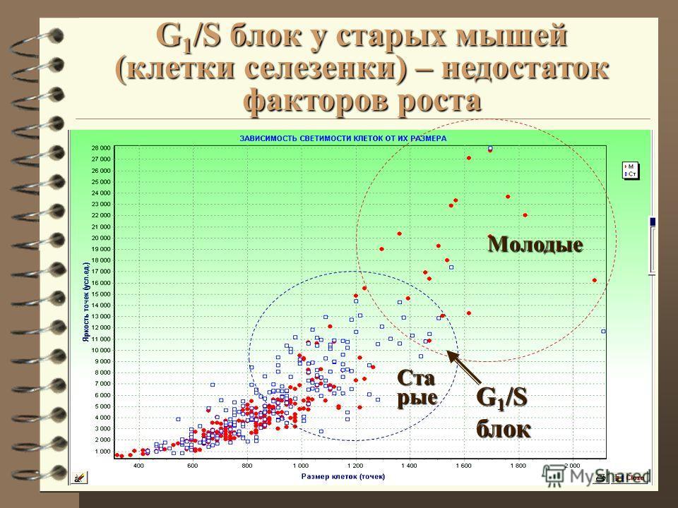 G 1 /S блок у старых мышей (клетки селезенки) – недостаток факторов роста G 1 /S блок Молодые Ста рые