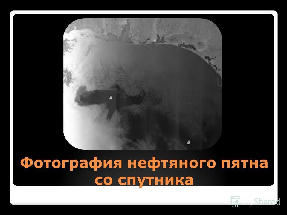 Фотография нефтяного пятна со спутника