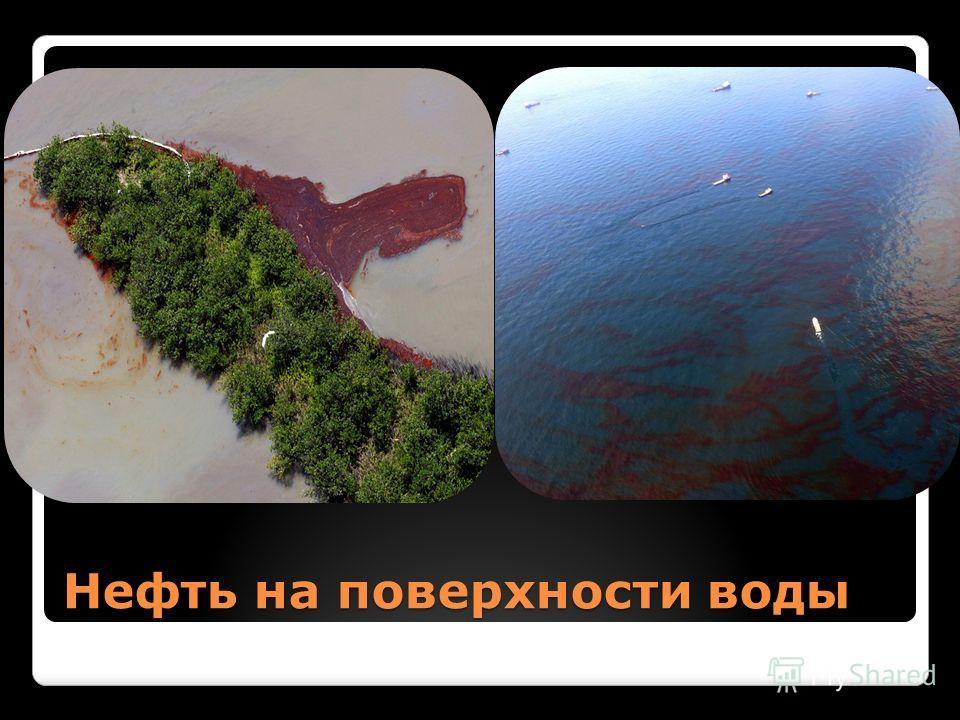 Нефть на поверхности воды
