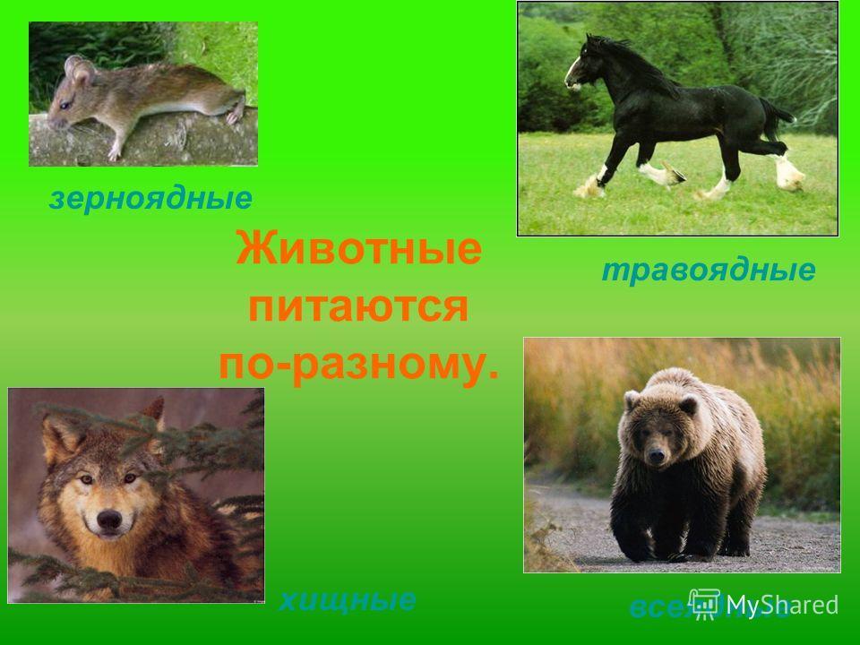 Животные питаются по-разному. травоядные хищные зерноядные всеядные