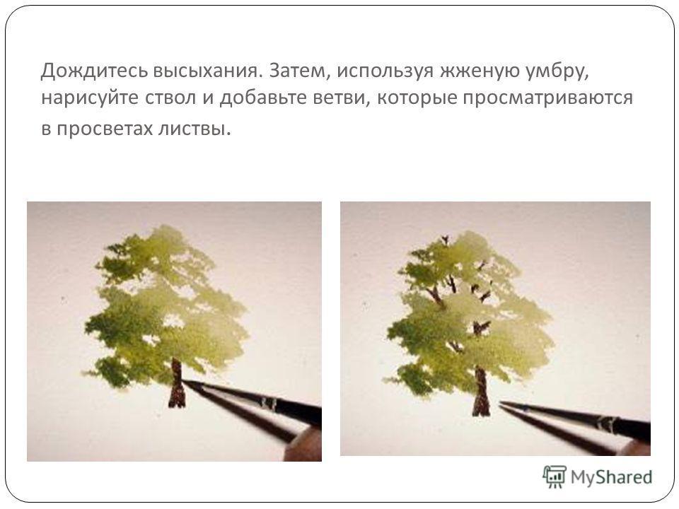 Дождитесь высыхания. Затем, используя жженую умбру, нарисуйте ствол и добавьте ветви, которые просматриваются в просветах листвы.
