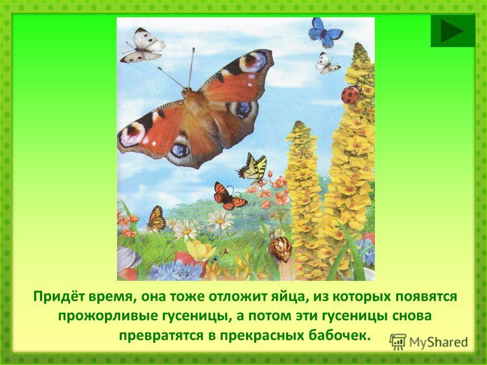 Придёт время, она тоже отложит яйца, из которых появятся прожорливые гусеницы, а потом эти гусеницы снова превратятся в прекрасных бабочек.