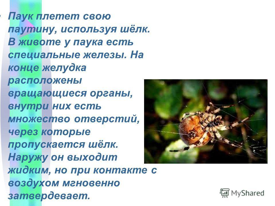 Паук плетет свою паутину, используя шёлк. В животе у паука есть специальные железы. На конце желудка расположены вращающиеся органы, внутри них есть множество отверстий, через которые пропускается шёлк. Наружу он выходит жидким, но при контакте с воз