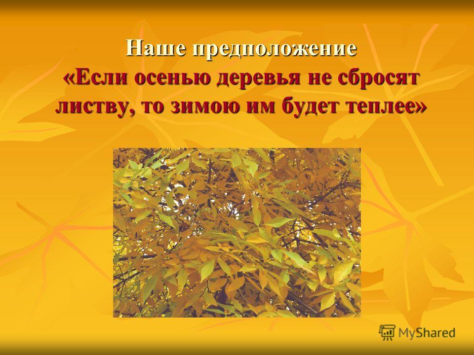 Наше предположение «Если осенью деревья не сбросят листву, то зимою им будет теплее»