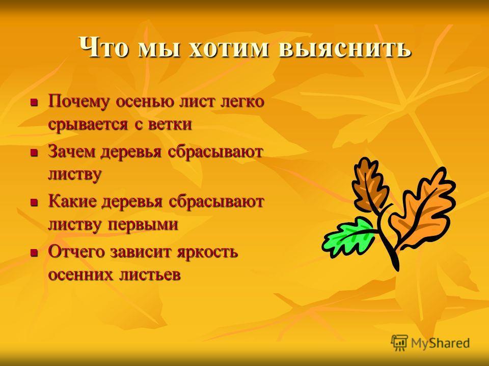 Что мы хотим выяснить Почему осенью лист легко срывается с ветки Почему осенью лист легко срывается с ветки Зачем деревья сбрасывают листву Зачем деревья сбрасывают листву Какие деревья сбрасывают листву первыми Какие деревья сбрасывают листву первым