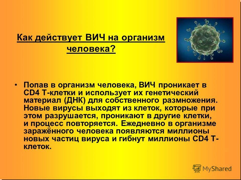 Как действует ВИЧ на организм человека? Попав в организм человека, ВИЧ проникает в CD4 T-клетки и использует их генетический материал (ДНК) для собственного размножения. Новые вирусы выходят из клеток, которые при этом разрушается, проникают в другие