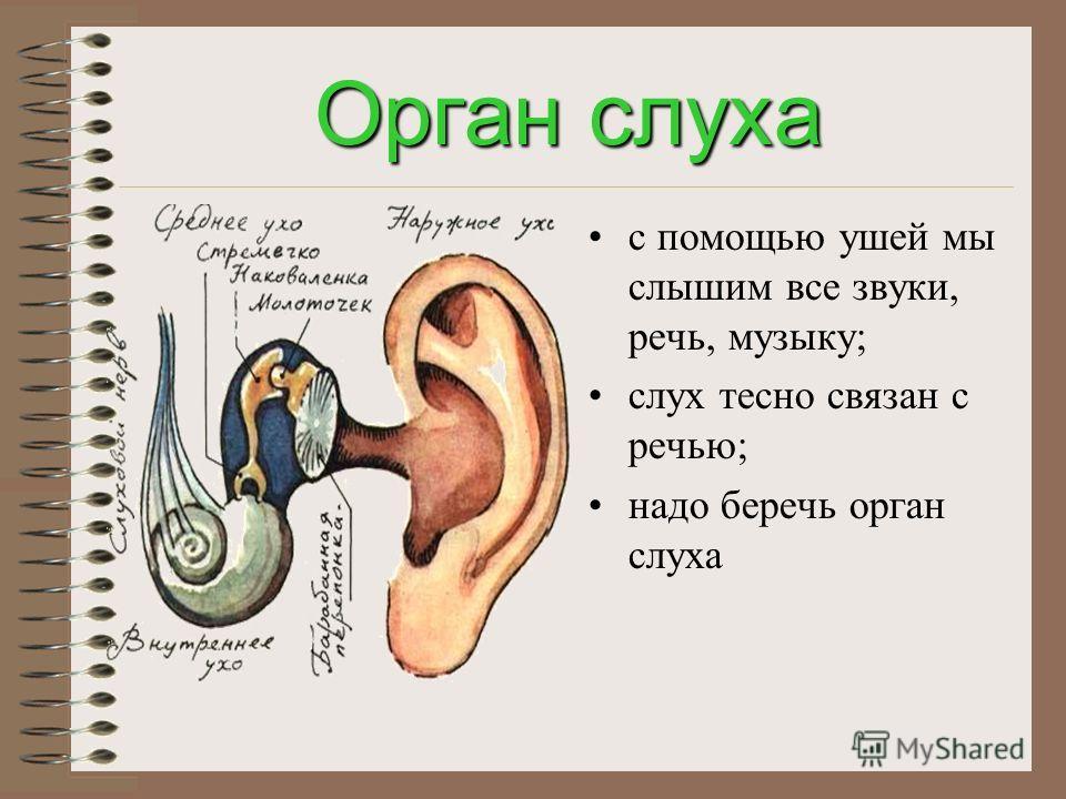 Орган зрения обладает способностью воспринимать величину, форму, цвет; благодаря зрению мы читаем, смотрим телепередачи, любуемся красотой природы; надо беречь зрение