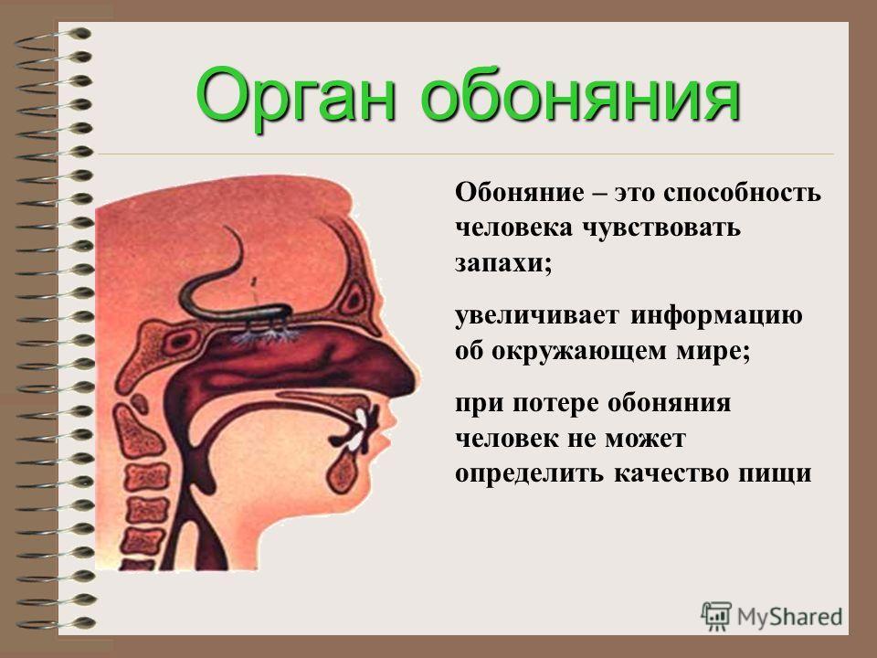 Орган слуха с помощью ушей мы слышим все звуки, речь, музыку; слух тесно связан с речью; надо беречь орган слуха