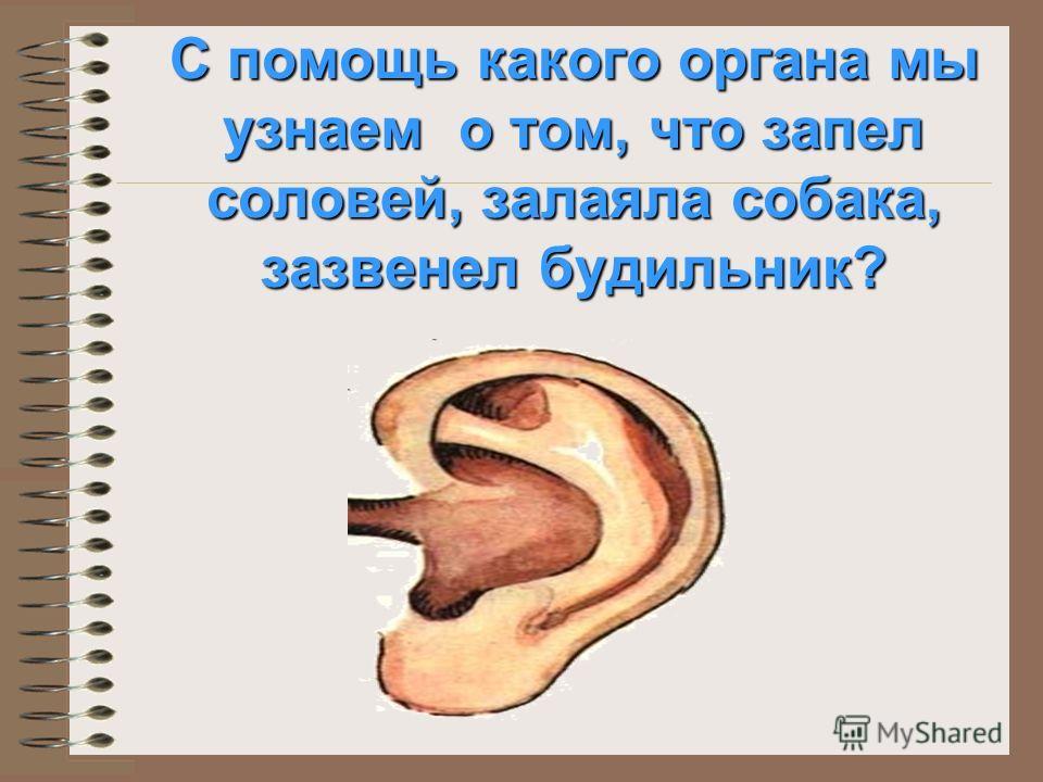 С помощью какого органа мы видим? зрачок радужная оболочка