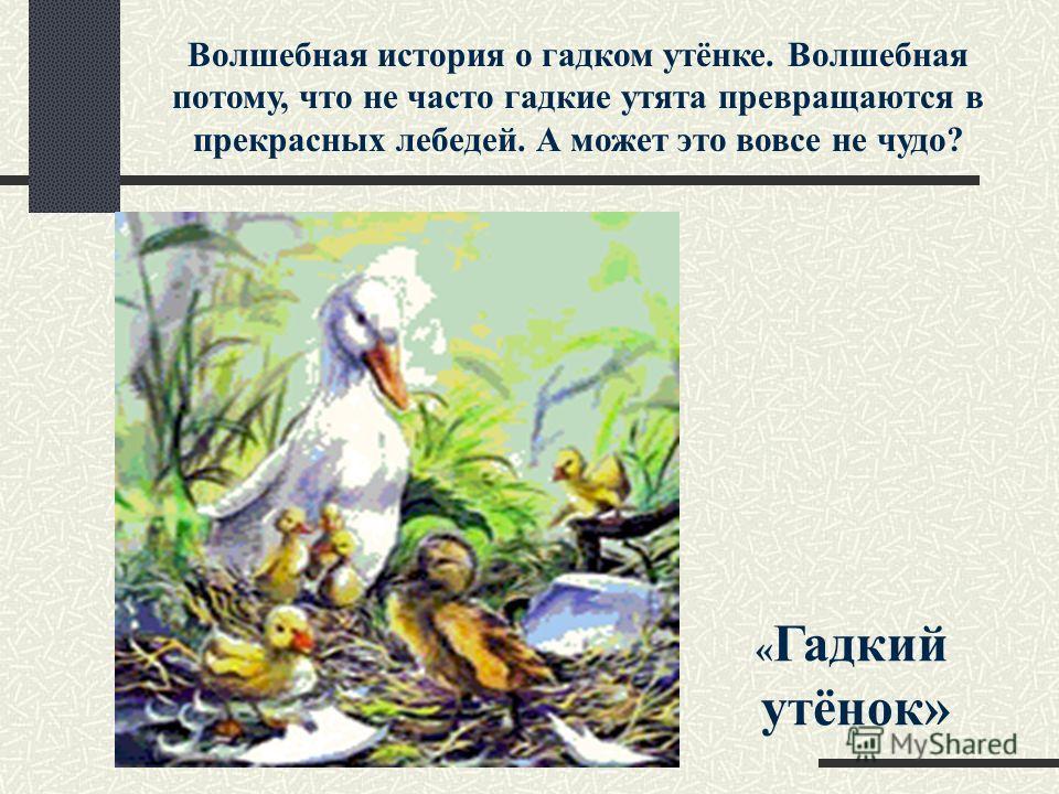 Волшебная история о гадком утёнке. Волшебная потому, что не часто гадкие утята превращаются в прекрасных лебедей. А может это вовсе не чудо? « Гадкий утёнок»
