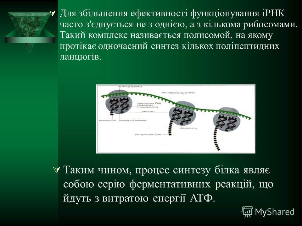 Для збільшення ефективності функціонування іРНК часто з'єднується не з однією, а з кількома рибосомами. Такий комплекс називається полисомой, на якому протікає одночасний синтез кількох поліпептидних ланцюгів. Таким чином, процессс синтезу білка явля