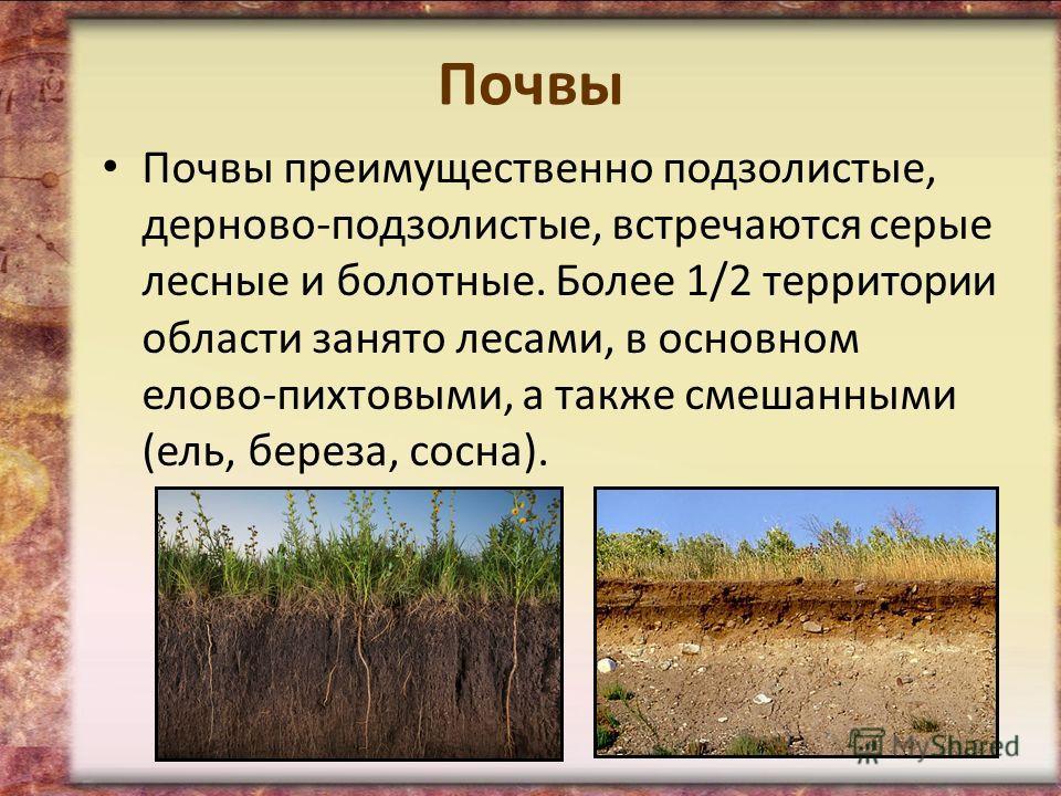 Почвы Почвы преимущественно подзолистые, дерново-подзолистые, встречаются серые лесные и болотные. Более 1/2 территории области занято лесами, в основном елово-пихтовыми, а также смешанными (ель, береза, сосна).