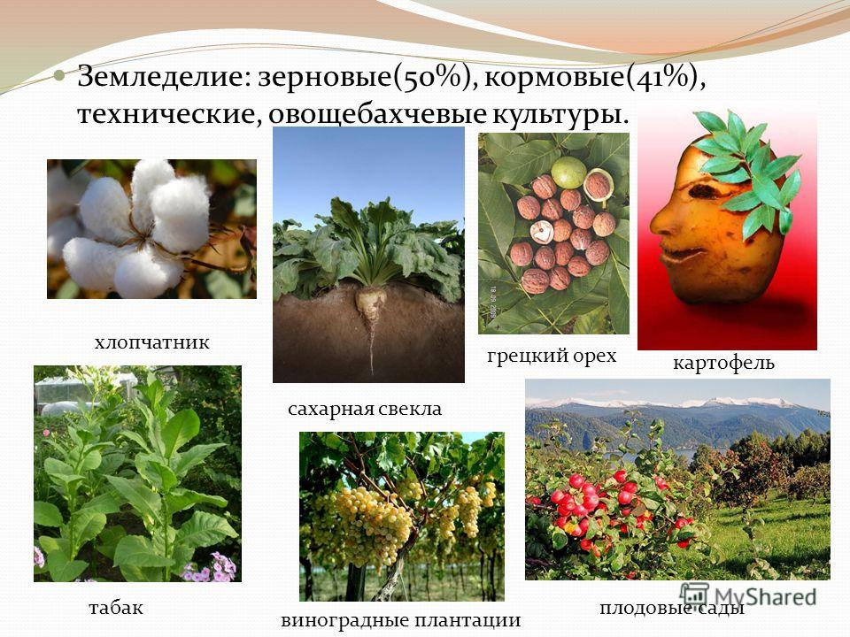 Земледелие: зерновые(50%), кормовые(41%), технические, овощебахчевые культуры. хлопчатник сахарная свекла картофель табак виноградные плантации плодовые сады грецкий орех