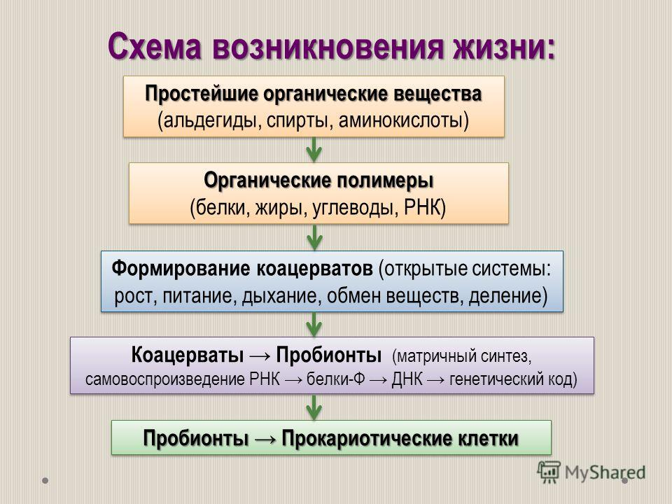 Схема возникновения жизни: Пробионты Прокариотические клетки Простейшие органические вещества Простейшие органические вещества (альдегиды, спирты, аминокислоты) Органические полимеры (белки, жиры, углеводы, РНК) Органические полимеры (белки, жиры, уг
