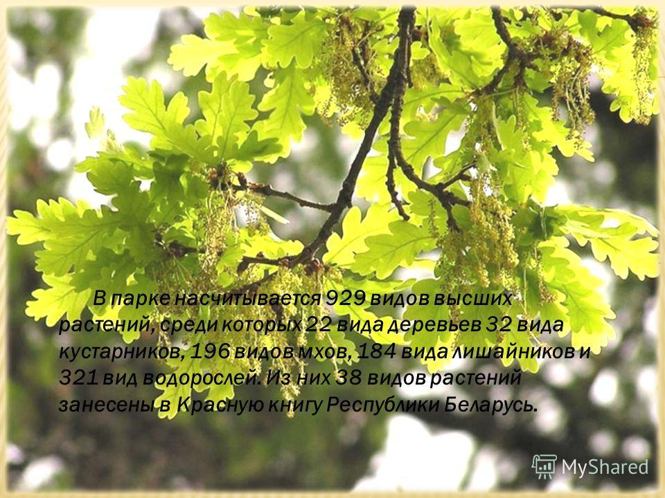 В парке насчитывается 929 видов высших растений, среди которых 22 вида деревьев 32 вида кустарников, 196 видов мхов, 184 вида лишайников и 321 вид водорослей. Из них 38 видов растений занесены в Красную книгу Республики Беларусь.