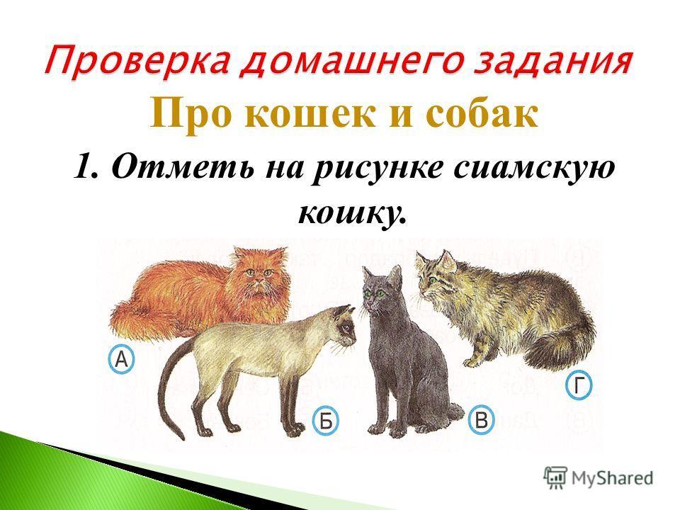 4. В каком ответе нарисованные животные подписаны правильно? А)волнистый попугайчик, синица, морская свинка Б)волнистый попугайчик, канарейка, морская свинка В)волнистый попугайчик, канарейка, белая крыса