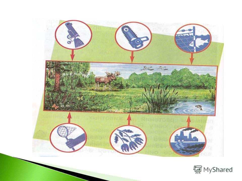 Красная книга содержит сведения о редких, исчезающих растениях и животных. Все они нуждаются в охране.