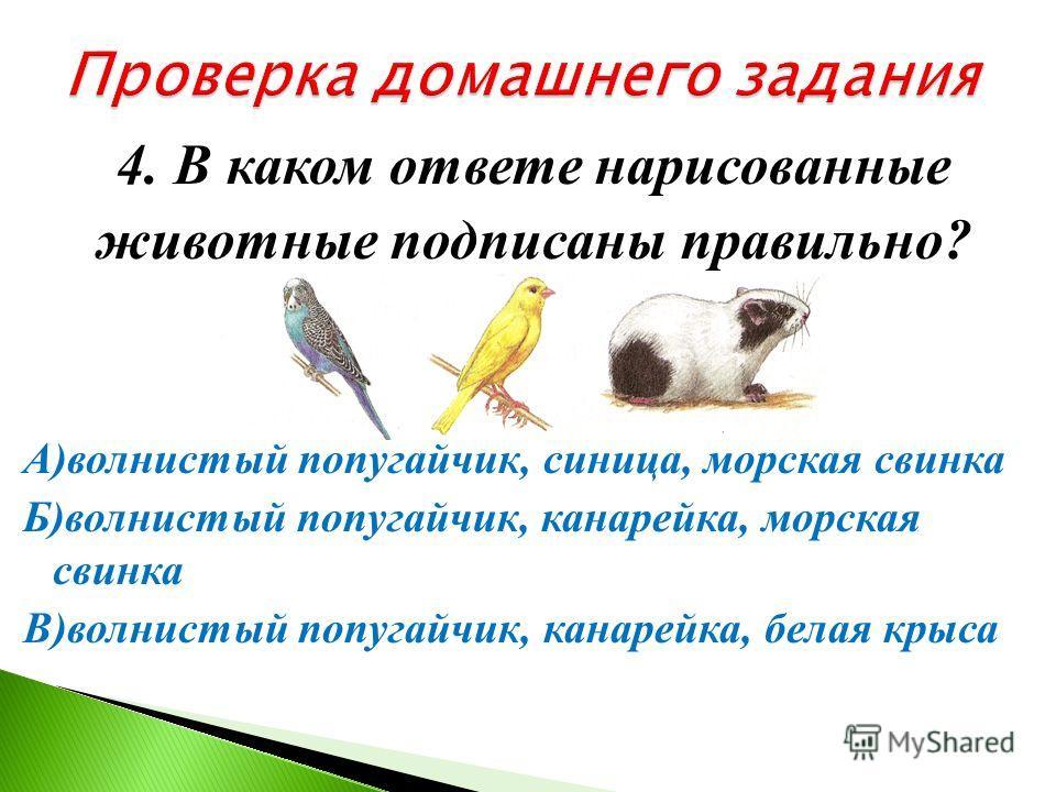 3. Какое животное НЕ может находиться в живом уголке? А) попугай Б) морская свинка В) черепаха Г) крот