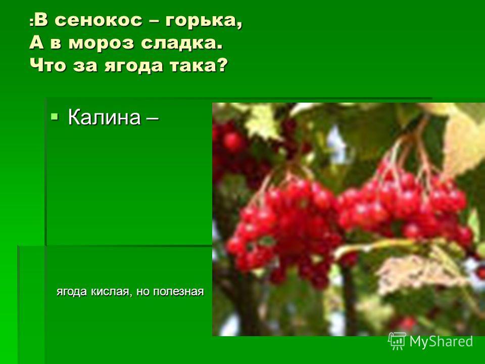 : В сенокос – горька, А в мороз сладка. Что за ягода така? Калина – Калина – ягода кислая, но полезная