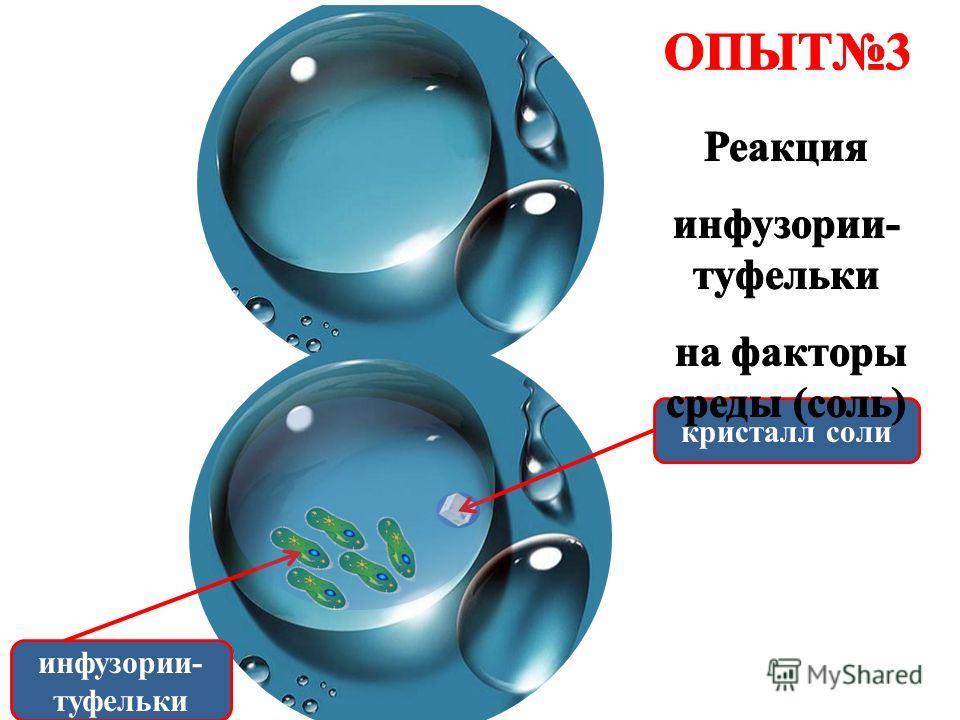инфузории- туфельки кристалл соли