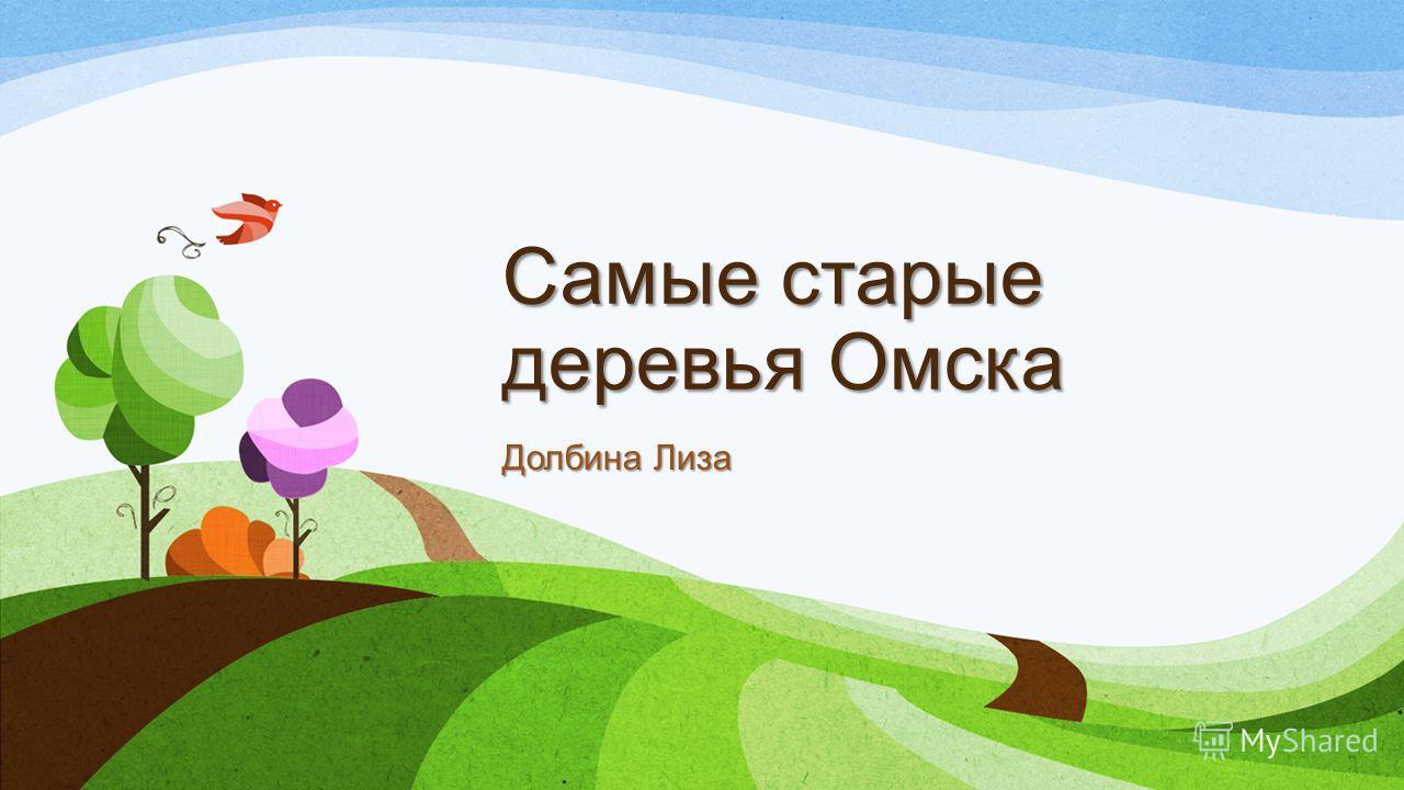 Самые старые деревья Омска Долбина Лиза