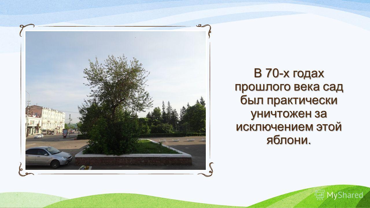 В 70-х годах прошлого века сад был практически уничтожен за исключением этой яблони.