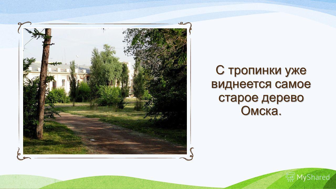 С тропинки уже виднеется самое старое дерево Омска.