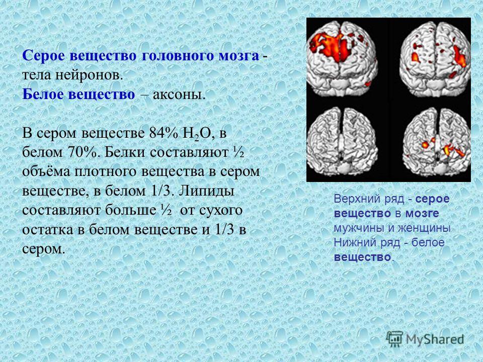 Верхний ряд - серое вещество в мозге мужчины и женщины Нижний ряд - белое вещество. Серое вещество головного мозга - тела нейронов. Белое вещество – аксоны. В сером веществе 84% H 2 O, в белом 70%. Белки составляют ½ объёма плотного вещества в сером