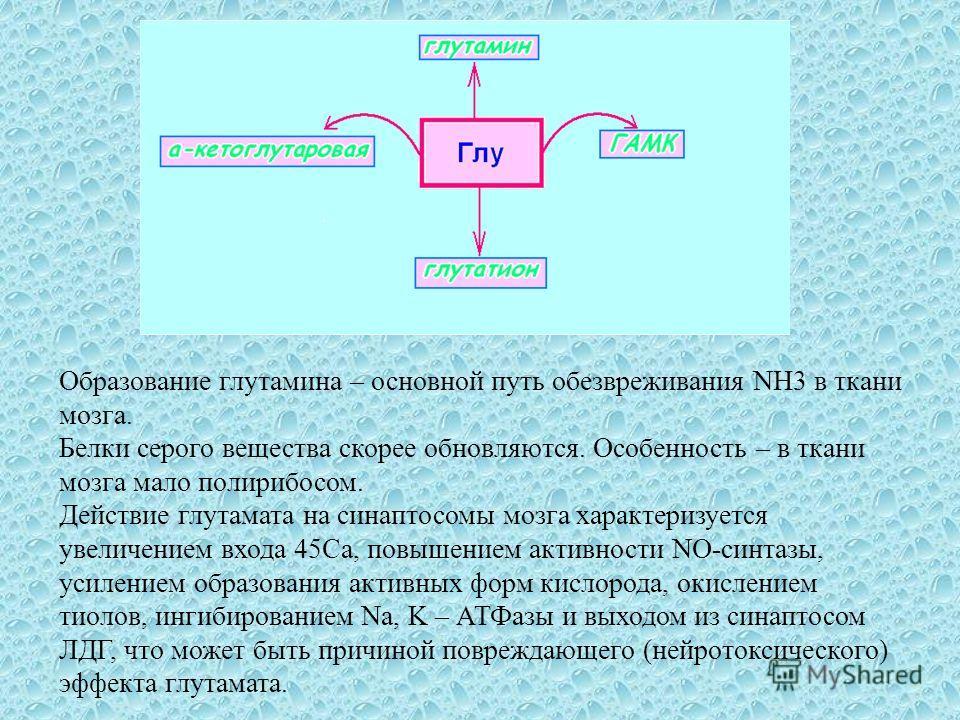 Образование грутамина – основной путь обезвреживания NH3 в ткани мозга. Белки серого вещества скорее обновляются. Особенность – в ткани мозга мало полирибосом. Действие грутамата на синаптосомы мозга характеризуется увеличением входа 45Ca, повышением