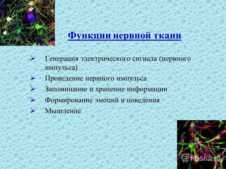 Функции нервной ткани Генерация электрического сигнала (нервного импульса) Проведение нервного импульса Запоминание и хранение информации Формирование эмоций и поведения Мышление