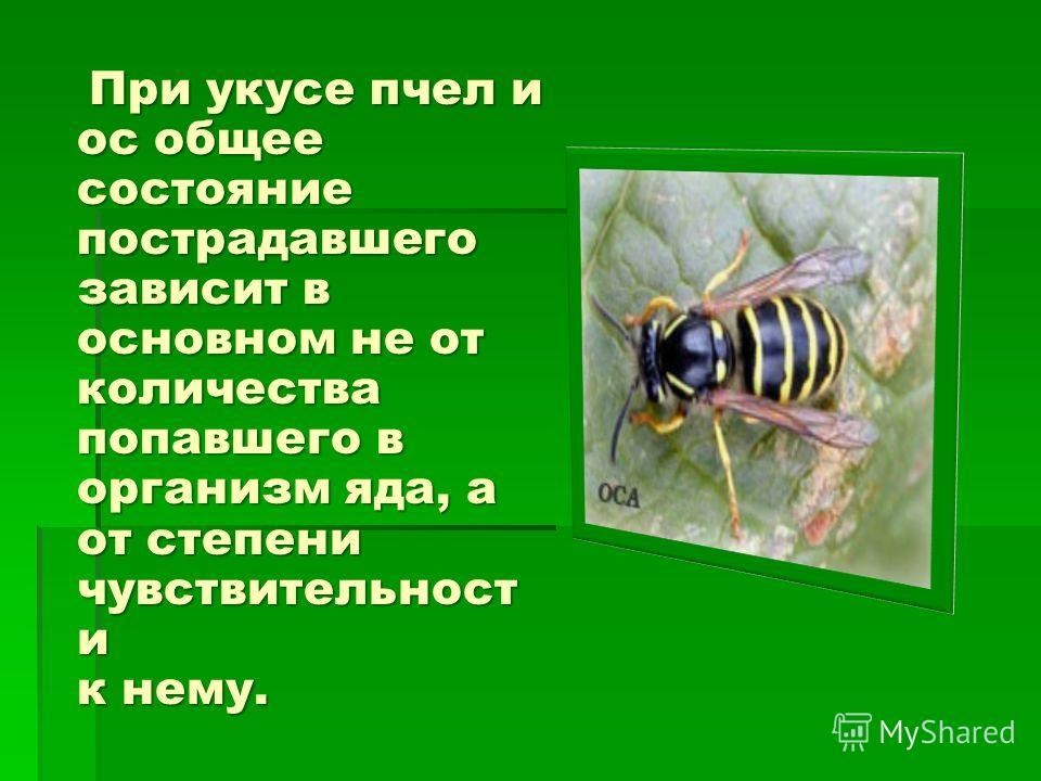При укусе пчел и ос общее состояние пострадавшего зависит в основном не от количества попавшего в организм яда, а от степени чувствительности к нему. При укусе пчел и ос общее состояние пострадавшего зависит в основном не от количества попавшего в ор