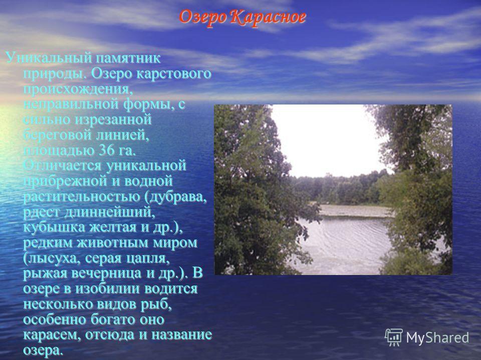 Озеро Карасное Уникальный памятник природы. Озеро карстового происхождения, неправильной формы, с сильно изрезанной береговой линией, площадью 36 га. Отличается уникальной прибрежной и водной растительностью (дубрава, рдест длиннейший, кубышка желтая