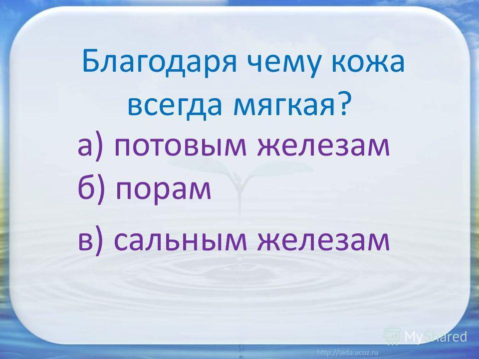 Благодаря чему кожа всегда мягкая? а) потовым железам б) порам в) сальным железам