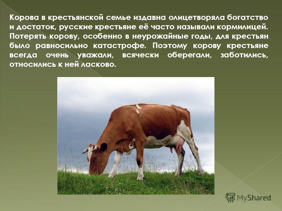 Корова в крестьянской семье издавна олицетворяла богатство и достаток, русские крестьяне её часто называли кормилицей. Потерять корову, особенно в неурожайные годы, для крестьян было равносильно катастрофе. Поэтому корову крестьяне всегда очень уважа