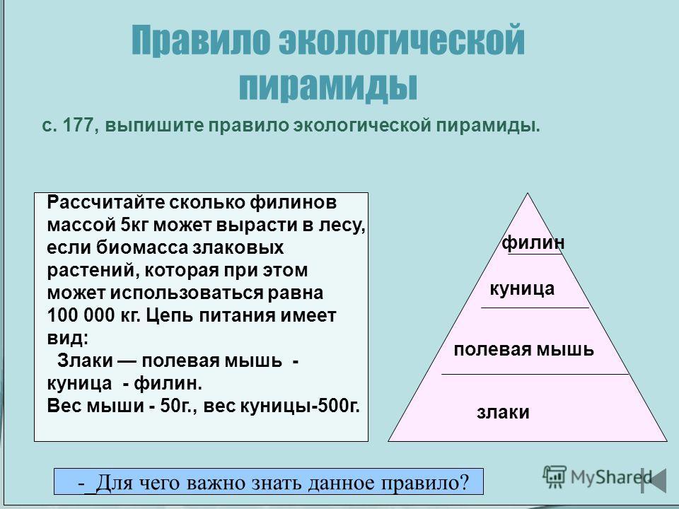 Разнообразие видов Эпиграф: Край родной, ты лесами красив, Ты раскинул поля широко, Серебристыми ветками ив Шелестят берега над рекой. В. Бакалдин. Правило экологической пирамиды с. 177, выпишите правило экологической пирамиды. Рассчитайте сколько фи