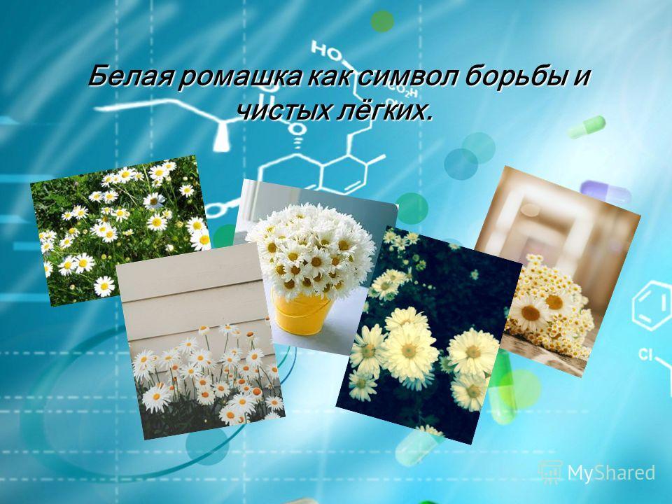 Белая ромашка как символ борьбы и чистых лёгких.