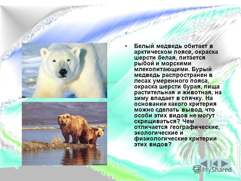 Белый медведь обитает в арктическом поясе, окраска шерсти белая, питается рыбой и морскими млекопитающими. Бурый медведь распространен в лесах умеренного пояса, окраска шерсти бурая, пища растительная и животная, на зиму впадает в спячку. На основани