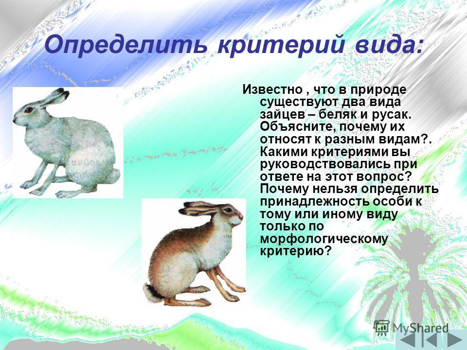 Определить критерий вида: Рисунки Известно, что в природе существуют два вида зайцев – беляк и русак. Объясните, почему их относят к разным видам?. Какими критериями вы руководствовались при ответе на этот вопрос? Почему нельзя определить принадлежно