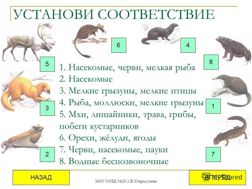 МОУ СОШ 28 Л.Е.Стародумова УСТАНОВИ СООТВЕТСТВИЕ 5 4 7 1 6 3 2 8 ВПЕРЁДНАЗАД 1. Насекомые, черви, мелкая рыба 2. Насекомые 3. Мелкие грызуны, мелкие птицы 4. Рыба, моллюски, мелкие грызуны 5. Мхи, лишайники, трава, грибы, побеги кустарников 6. Орехи,