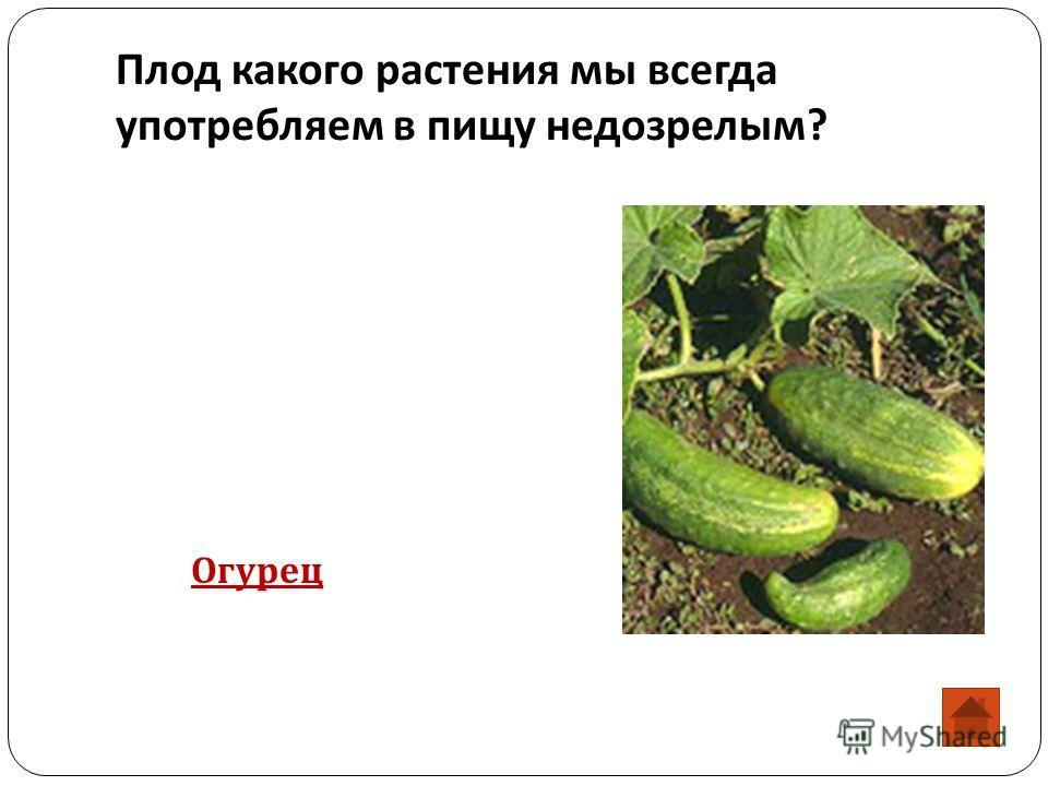 Плод какого растения мы всегда употребляем в пищу недозрелым ? Огурец