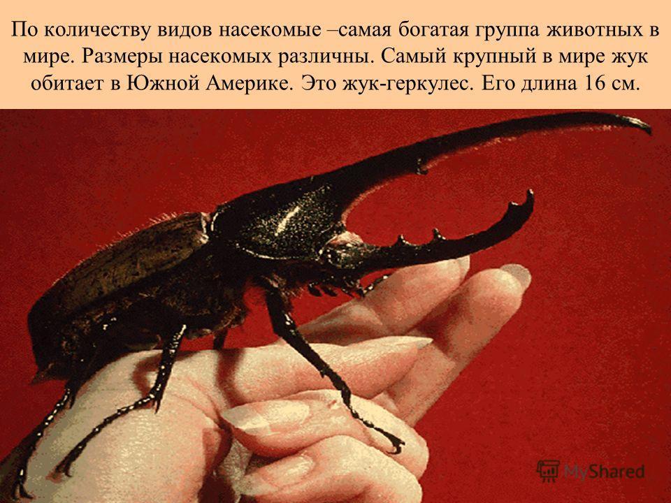По количеству видов насекомые –самая