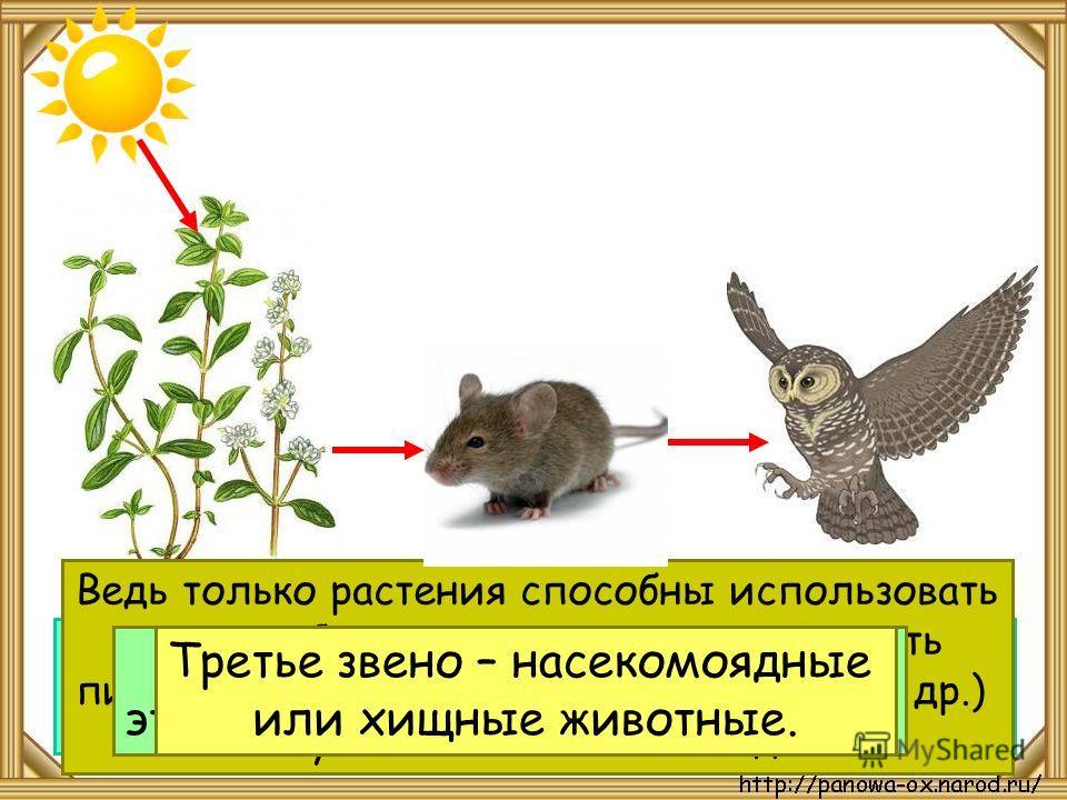 Цепи питания начинаются с растения. Это первое звено. Ведь только растения способны использовать энергию Солнца, создавать, производить питательные вещества (сахар, крахмал и др.) из углекислого газа и воды. Второе звено цепи – это растительноядные ж