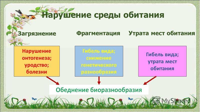 Нарушение среды обитания Загрязнение Фрагментация Утрата мест обитания Нарушение онтогенеза; уродство; болезни Гибель вида; снижение генетического разнообразия Гибель вида; утрата мест обитания