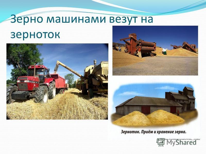 Зерно машинами везут на зерноток