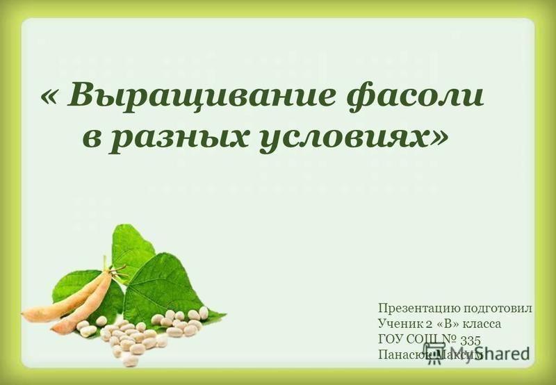 Презентацию подготовил Ученик 2 «В» класса ГОУ СОШ 335 Панасюк Максим « Выращивание фасоли в разных условиях»